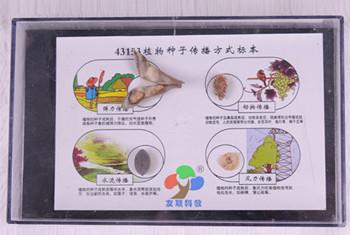 43153植物种子传播方式标本-小学科学教学仪器-河南