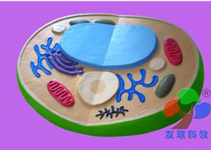 植物细胞亚显微结构模型
