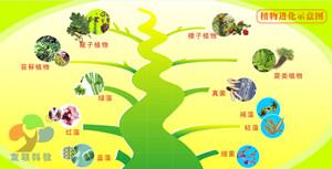 植物进化图